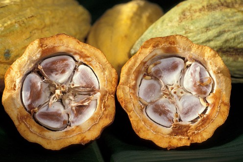 These are cocoa beans in their pod.