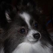 SusieM profile image