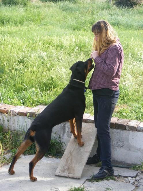 Clicker training my dog, adry