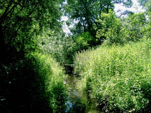 This woodland stream is a watering hole for local wildlife. Photograph by D.A.L.