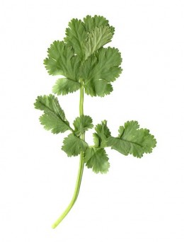 Cilantro, a must for this recipe