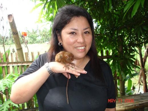 Celle holding a tarsier