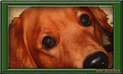 Dog CPR and Heimlich Maneuver [Videos]