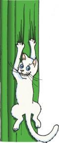 The Adolescent Indoor Cat