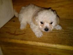 Xena: My Warrior Puppy
