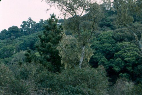 The lush vegetation at Point Reyes National Seashore, north of San Francisco.