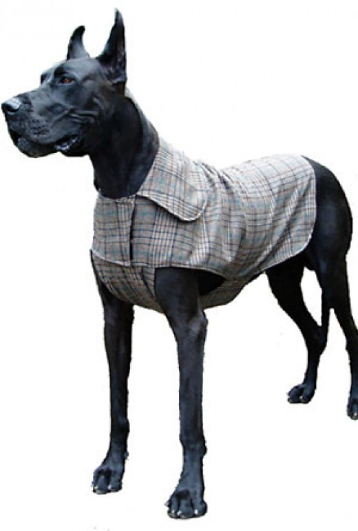 Apparel for larger breeds will cost more due to the use of more fabric and because they may need to be custom made in some cases.  Like Great Danes!