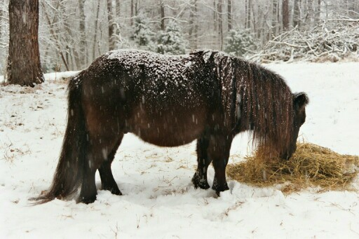 make sure the horse has hay available 24/7 to satisfy its instinct to graze as well as its nutritional needs.