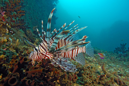 Sri Lanka Coral Fish
