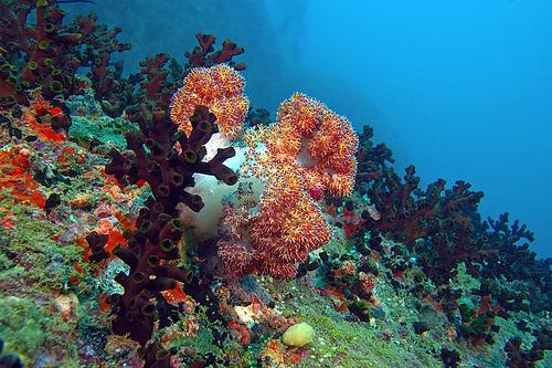 Sri Lanka Unter Water Corel Reef