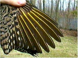 Close up of wings.