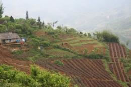 Gardens in Sapa