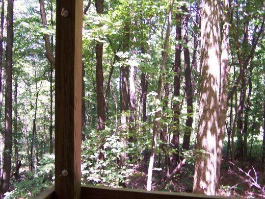 enjoy the wooded view