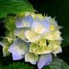 lilmami10984 profile image