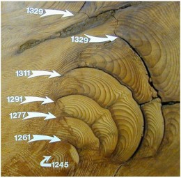 Tree rings also show us cycles and can give us surprising information on the past. In this sample, we can see distinct cycles marked by years in history.