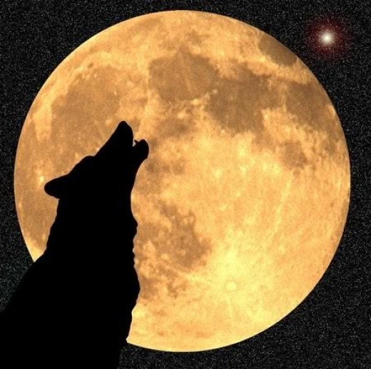 Xena reminds me of a wolf howling at the moon (Google Images)