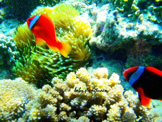 corals and colorful fishes