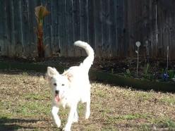 Puppy Training Program  Courtesy of Wikipedia Commons