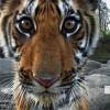 dakiniTigers profile image