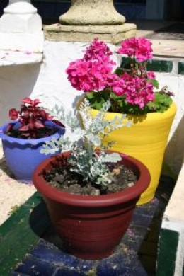 An Introduction to Deck Container Gardening