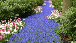 The Most Beautiful Spring Garden In The World