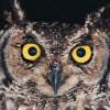 AquteIntel profile image