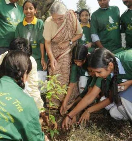 Tree plantation drive