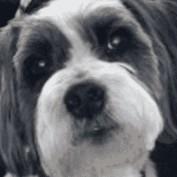 E M Smith profile image