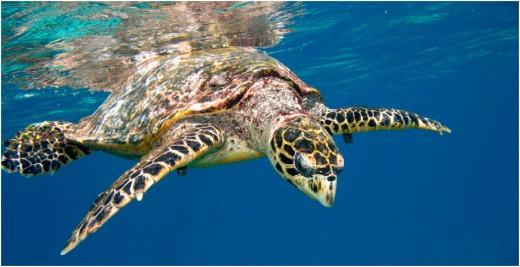 Turtle spotting...