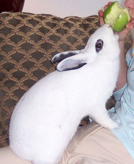 How To Protect Furniture From Pet Rabbits Chewing Keep