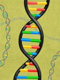 Protect your DNA with virgin olive oil!