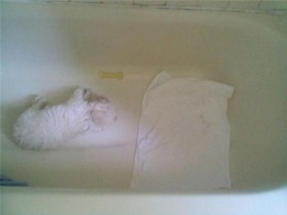 """Xena literally """"chilling"""" in the tub during a heatwave"""