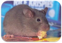 Rodents and Pest Repellent Systems