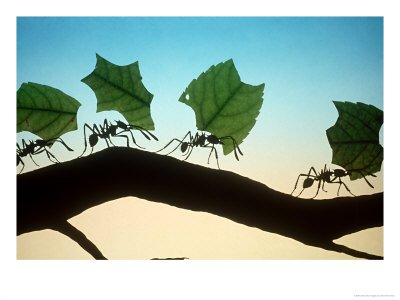 Ants working faithfully.