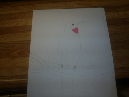 Add the red color near the throat of the bird. Copyright of Sweetiepie.