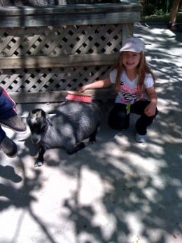 Kids love the hands on experience of the petting zoo.