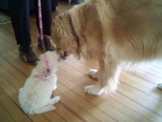 Xena meets Molly