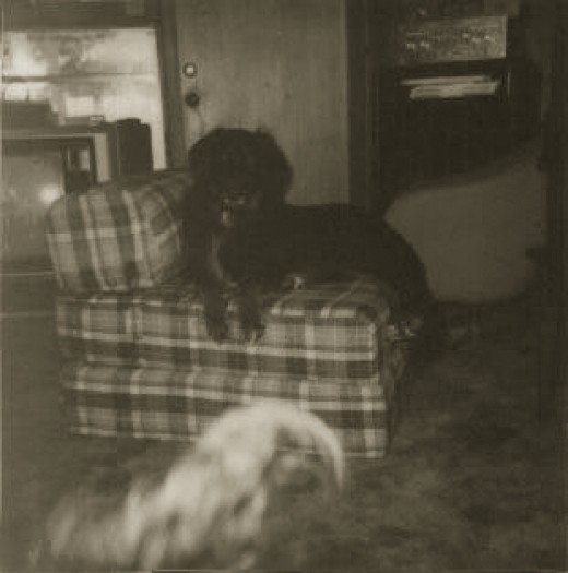A dog, being haunted. It would appear that dogs don't mind being haunted.