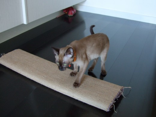 Scratching post made out of a plank of wood with carpet wrapped around it, wrong-side-up.