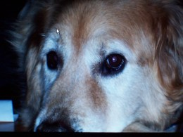 A great dog, Buddy died two years ago at the age of eighteen.