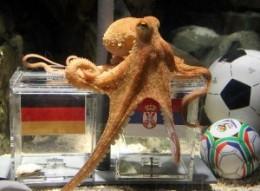 "Paul the ""psychic"" octopus"