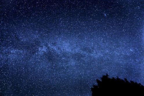 The Milky Way Galaxy contains 300,000,000,000 stars. Stars and flowers are sometimes interchangeable in poetry.