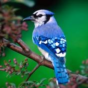 bluejay900 profile image