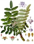 Everything You Need to Know When Deciding to Use Herbal or Natural Remedies