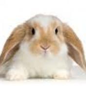 Danicepan profile image