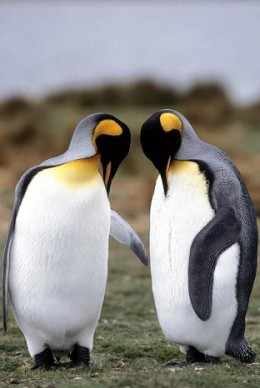 Penguins are neither agnostic nor atheistic, and I suspect even not theistic, yet know better how to live in peace..