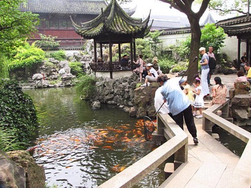Kois at Yuyuan Garden