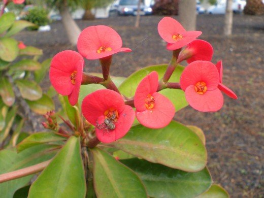 Crown of Thorns Photo by Steve Andrews