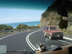 11. Australian Road Trip: Schoolies, Koalas & Flies on the Great Ocean Road