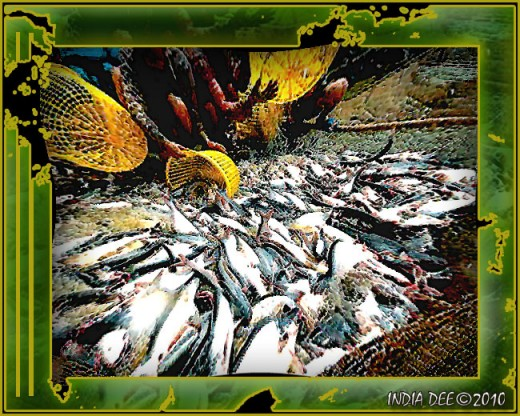 Gathering fish at MeKong catfish farm - Abstract design